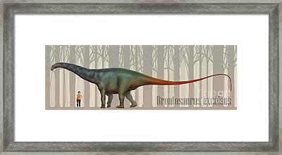 Brontosaurus Excelsus Size Compatison Framed Print by Christian Masnaghetti