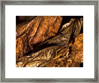 Bronze Leaves Framed Print