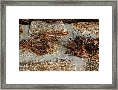 Framed Print featuring the photograph Bronze Symmetry by Deborah  Crew-Johnson