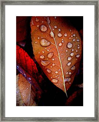 Bronzed Leaf Framed Print by The Forests Edge Photography - Diane Sandoval