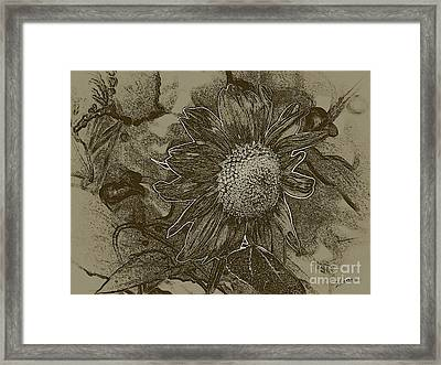 Bronzed Out Sunflower Framed Print