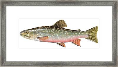Brook Trout Framed Print by American School