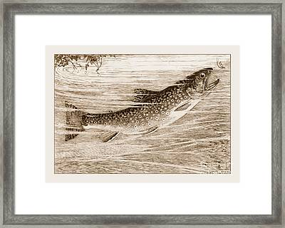 Framed Print featuring the photograph Brook Trout Going After A Fly by John Stephens