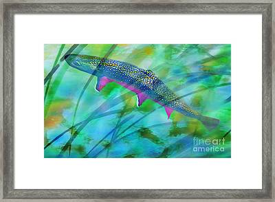 Brook Trout In The Stream Framed Print by Terril Heilman