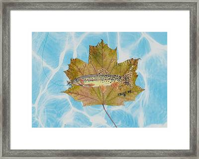 Brook Trout On Fly Framed Print