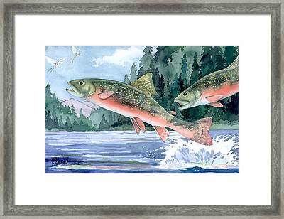 Brook Trout Framed Print by Paul Brent