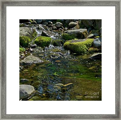Brookie Pool Framed Print by Skip Willits