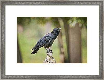 Brother Crow On St. Francis' Head Framed Print by Bonnie Barry
