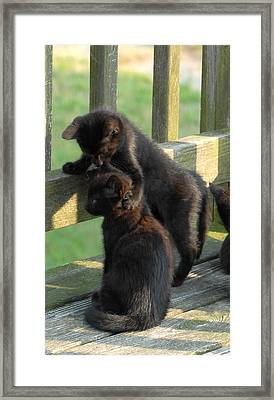 Brotherly Love Framed Print by Joyce StJames