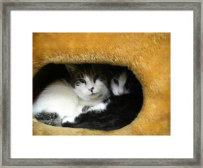 Brotherly Love Framed Print by Pat Nalls