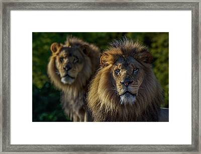 Brothers Framed Print by Ashley Noble