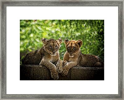 Brothers Chillin Framed Print