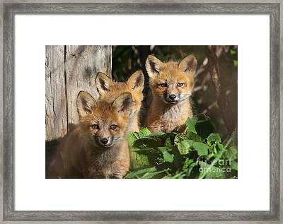 Brothers Framed Print by Mircea Costina Photography
