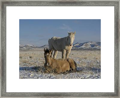 Brother's  Framed Print by Nicole Markmann Nelson