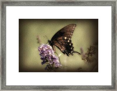 Brown And Beautiful Framed Print by Sandy Keeton