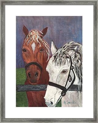 Brown And White Horses Framed Print