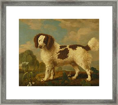 Brown And White Norfolk Or Water Spaniel Framed Print by George Stubbs