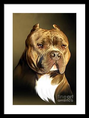 Pitbull Framed Prints