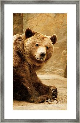 Brown Bear Framed Print by Louise Fahy