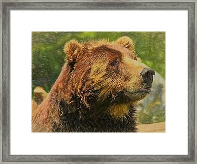 Brown Bear Portrait Framed Print