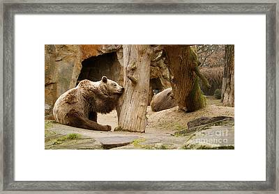Brown Bears Framed Print by Louise Fahy