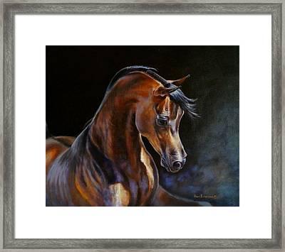 Brown Beauty - Arabian Stallion Framed Print by Anna Franceova