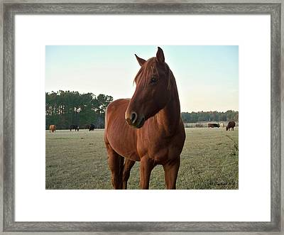 Framed Print featuring the photograph Brown Beauty by Betty Northcutt