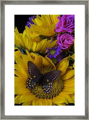 Brown Butterfly On Sunflower Framed Print by Garry Gay