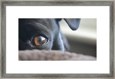 Brown Eyed Boy Framed Print