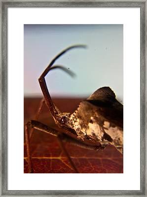 Brown-eyed Bug Framed Print by Douglas Barnett