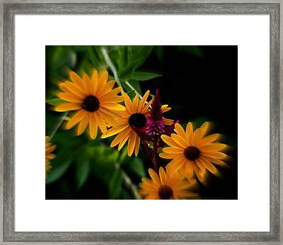 Brown Eyed Susans Framed Print by Martin Morehead