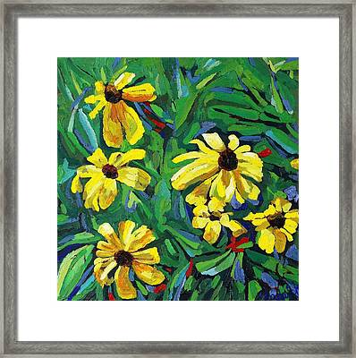 Brown-eyed Susans Framed Print by Phil Chadwick