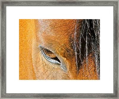 Brown-eyed Wild Horse Framed Print by Liz Vernand