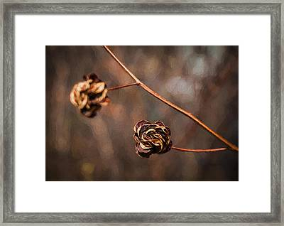 Brown Flower Seed Framed Print by Kathleen Scanlan