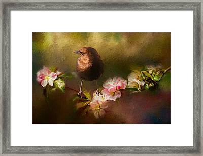 Brown-headed Cowbird - Painting Framed Print by Ericamaxine Price