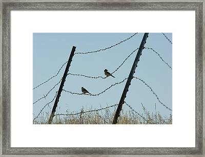 Brown-headed Cowbirds Sit On A Wire Framed Print by Joel Sartore