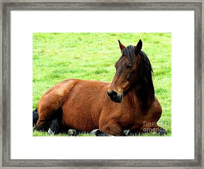 Brown Horse At Rest . R5906 Framed Print by Wingsdomain Art and Photography