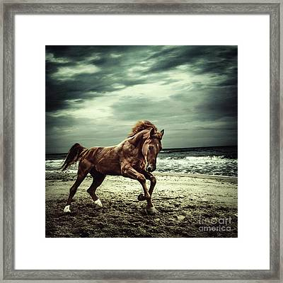 Brown Horse Galloping On The Coastline Framed Print