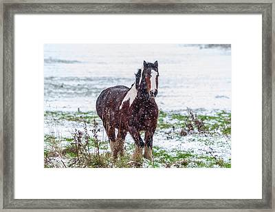Brown Horse Galloping Through The Snow Framed Print