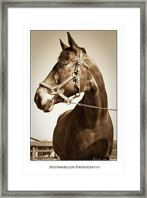 Brown Horse Framed Print