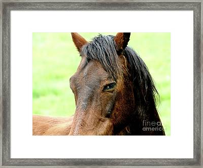 Brown Horse With Sultry Eye . R5907 Framed Print by Wingsdomain Art and Photography