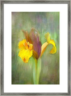 Brown Iris Framed Print by Angela A Stanton