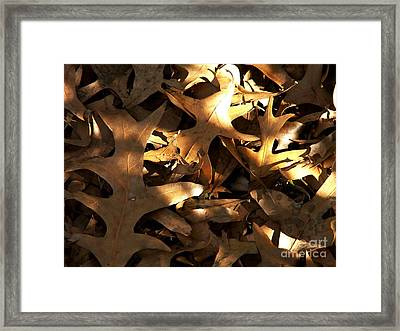 Brown Leaves And Sunlight Framed Print