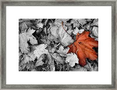 Brown Maple Leaf Framed Print
