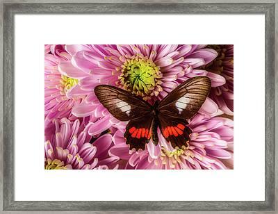 Brown Orange Butterfly Framed Print