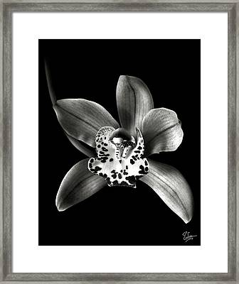 Brown Orchid In Black And White Framed Print