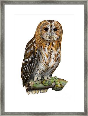 Framed Print featuring the painting Brown Owl Or Eurasian Tawny Owl  Strix Aluco - Chouette Hulotte - Carabo Comun -  Nationalpark Eifel by Urft Valley Art