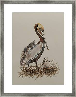 Brown Pelican And Chicks Framed Print by Laurie Tietjen