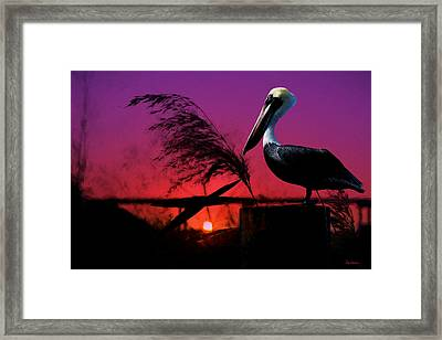 Brown Pelican At Sunset - Painted Framed Print by Ericamaxine Price