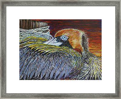 Brown Pelican Framed Print by David Joyner